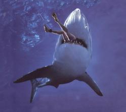 shark250