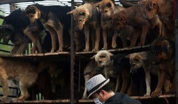 CHINA-ANIMAL-DOGS-20110417-061416