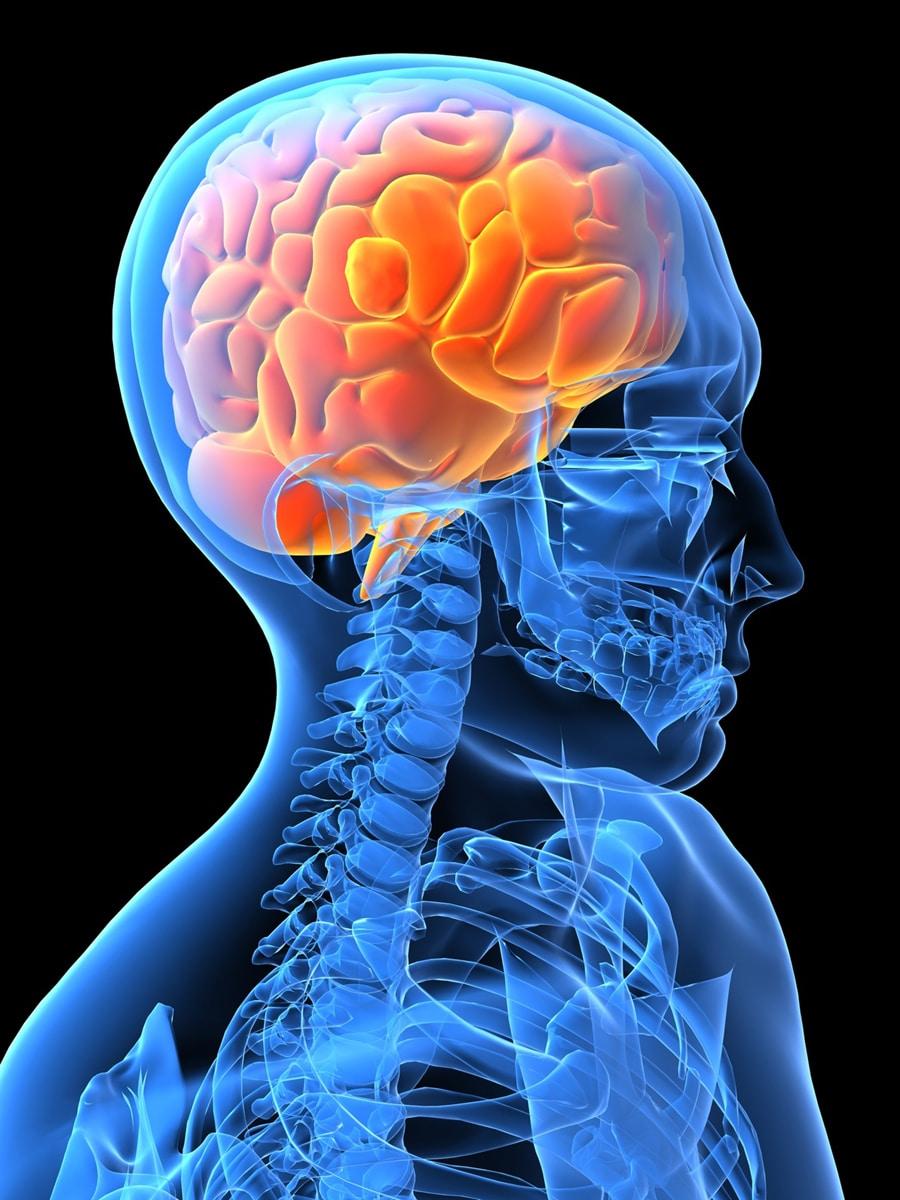 The study of neuroscience