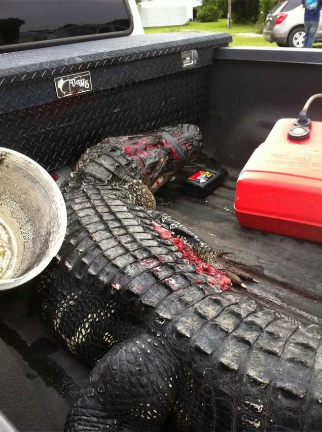 Florida teenager decides to let alligator take his arm so he could live.