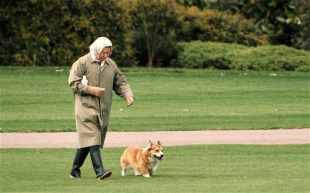 The Queen taking out one of her Corgis for a stroll. Work that bixch...