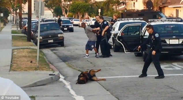 Were police right to kill dog who leapt at them after owner was arrested?