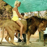 Is an Argentinian zoo drugging lions so tourists can pose for photos?