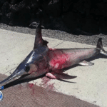 Randy Llanes: Swordfish takes revenge and impales fisherman to death after being caught