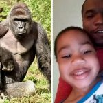 Isiah Dickerson photos: Mommy I want to swim with Harambe the gorilla