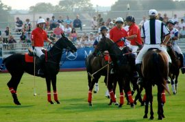Polo: The Sport of Socializing
