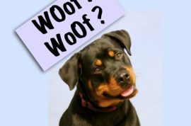 UK man working at zoo guilty of penetrating pet Rottweiler.