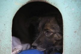 Now Brazil has slums for dogs.