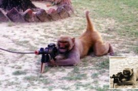 Good news! Monkeys can't be trained to shoot people.