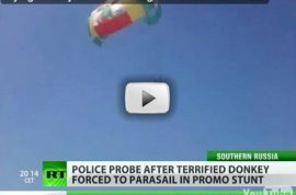 Have you met Russia's parasailing donkey yet?