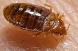 There are more bedbugs in your sweater than you think…