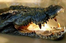 Aircraft crashes after escaping crocodile causes panic.
