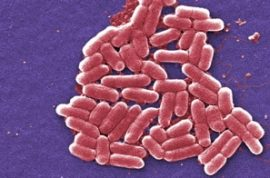 Scientists Create Programmable Bacteria