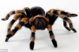 Sven Koppler Arrested for Sending Hundreds of Tarantulas to the US By Post