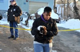 65 animals, including chincillas, cow, pigs, cats found dead in Long Island home.