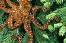 Endangered Tree Octopus shows that anything can be true once it's posted on the internet