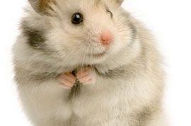 Teenager arrested for killing little brother's hamster.