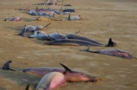 Dead Dolphin Dilemma.