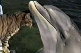 Cat and dolphin make out.