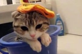 Depressed kitten in a bucket.