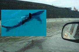 Did you notice a shark swimming down the freeway? Welcome to Hurricane Irene…