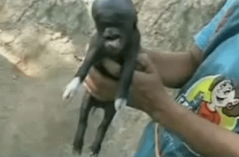 Pig born with human head; locals fear alien apocalypse