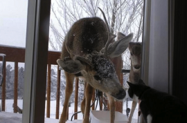 And this morning this is what Jennifer noticed out of her kitchen window….