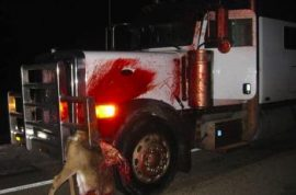 (Graphic). This is how it looks like when a deer is run over by a semi trailer…
