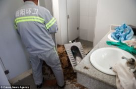 Chinese woman gives birth in public restroom only to watch in horror as newborn is flushed away…