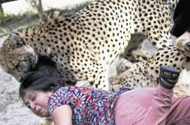 Woman mauled by cheetah survived by playing dead