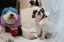 Were you invited to the world's most expensive pet dog wedding yesterday?