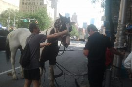 Pictures: Runaway Horse Collides With Car at NYC's Columbus Circle.