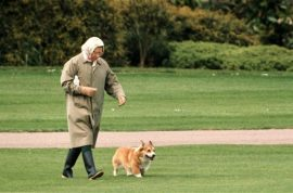 Oh my! Queen's corgis attack Princess Beatrice's terrier. Blood everywhere…