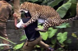 Beware of the man eating leopard(s) attacks in Nepal.