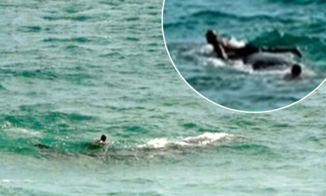 Sperm whale pictured being ridden by swimmer found dead an hour later.