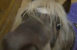 Man wanted for raping multiple miniature horses and killing guard dog.