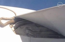 Did you manage to also see the python snake whilst on your Qantas flight too?