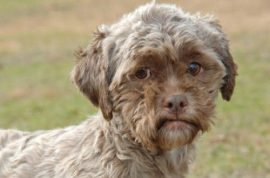 Dog with human face desperate for you to adopt it.