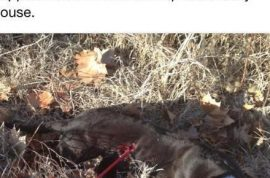Oklohoma teen forced to leave town after Facebook erupts after he posts pictures of dog shot with arrow.