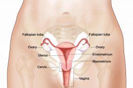 Vagina is still a dirty word, just ask one Idaho biology teacher.