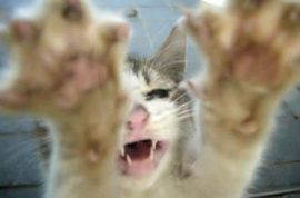 Man sues neighbor who may be his wife for $100K after cat attacks him.