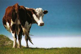 Joao Maria de Souza killed when cow fell through bedroom roof.