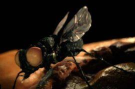 Rochelle Harris discovers headache is really flesh eating maggots inside her head.