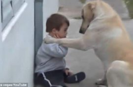 Video: Labrador plays with down syndrome boy and world is ecstatic.