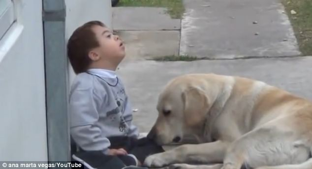 Labrador plays with down syndrome boy