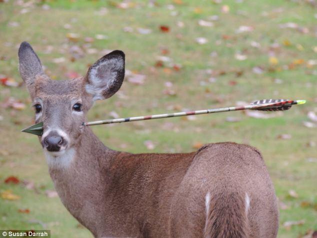 dear with an arrow through its head