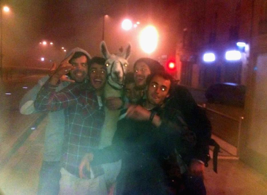 Drunk French teens steal llama