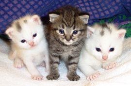 Mamoru Demizu, Japanese man steals $200K to buy cat food.