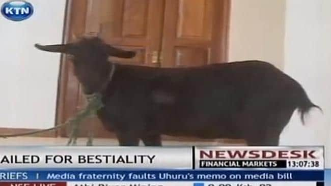Man In Kenya Sentenced For Having Sex With Goat