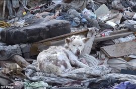 Abandoned dog on a trash heap gets a second lease of life.
